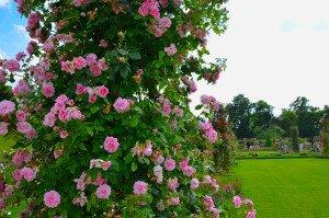 Il roseto di Bagatelle è un'oasi di meraviglie e profumi… il mio riassunto con 20 splendide foto