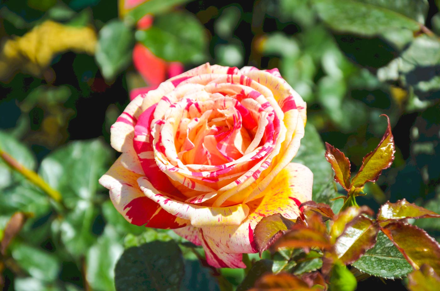 Giardino giapponese di Parigi particolare dei fiori