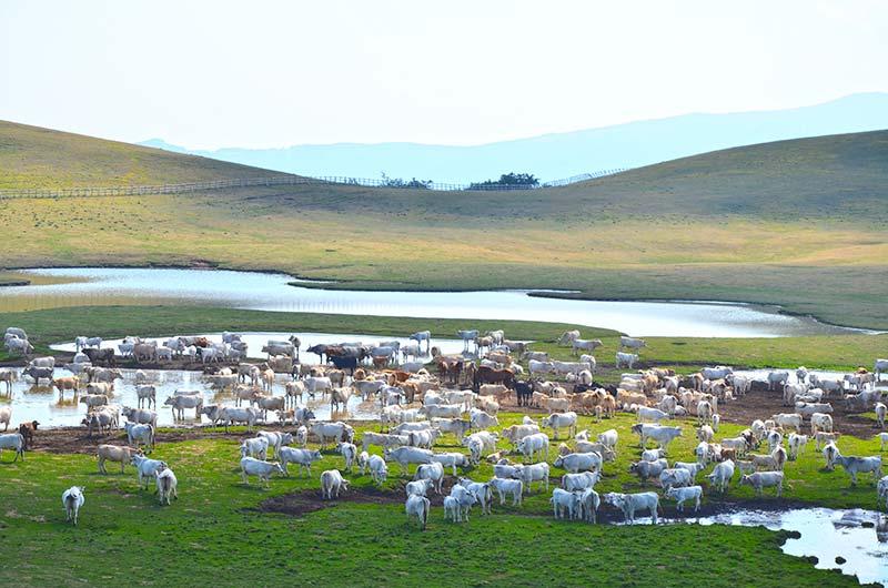 Parco nazionale dei monti sibillini umbria